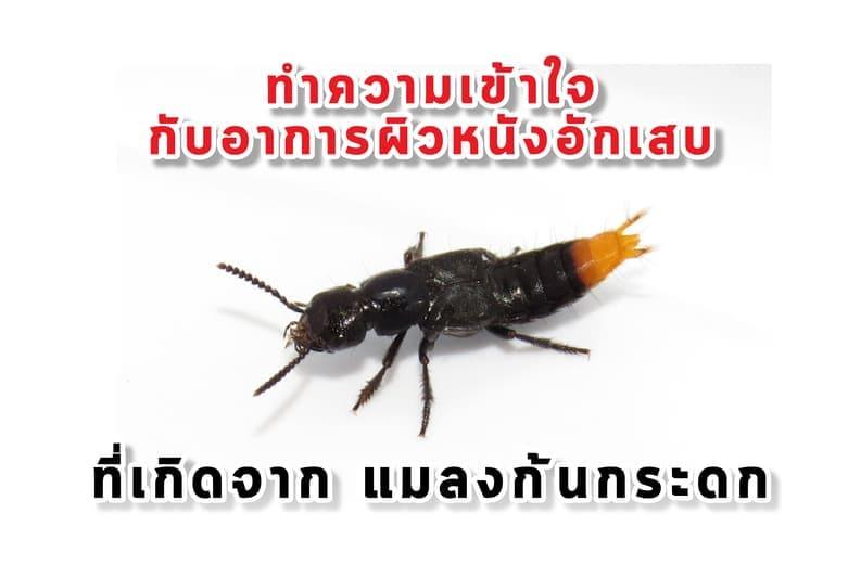 จัดการแมลงก้นกระดก