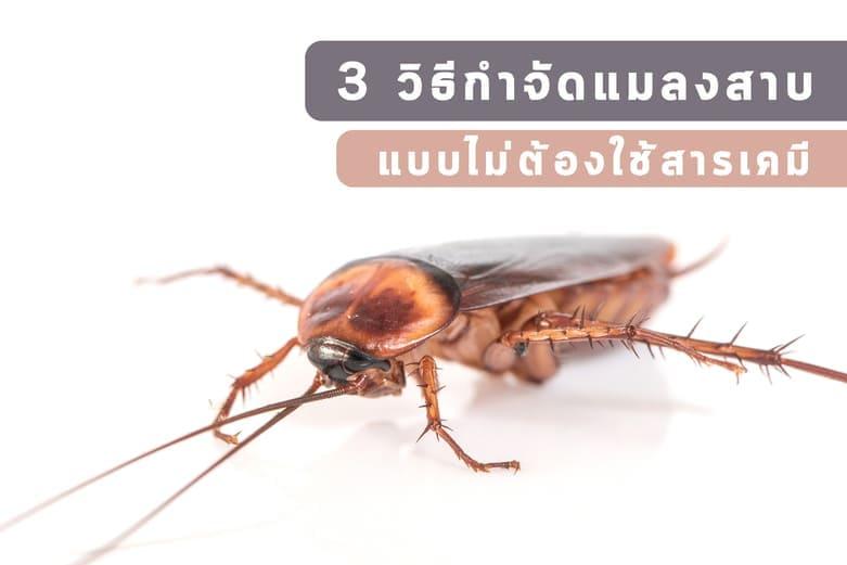 จัดการแมลงสาบ