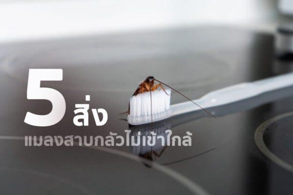 5 สิ่งที่ทำ แมลงสาบกลัว