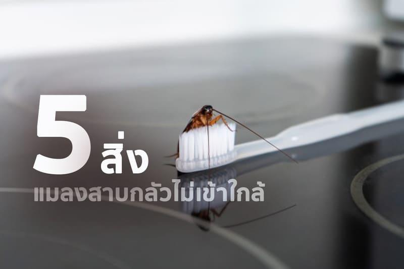 5 อย่างที่ทำ แมลงสาบกลัว