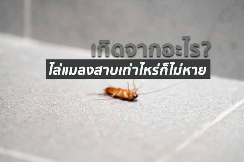 แมลงสาบไม่ไป